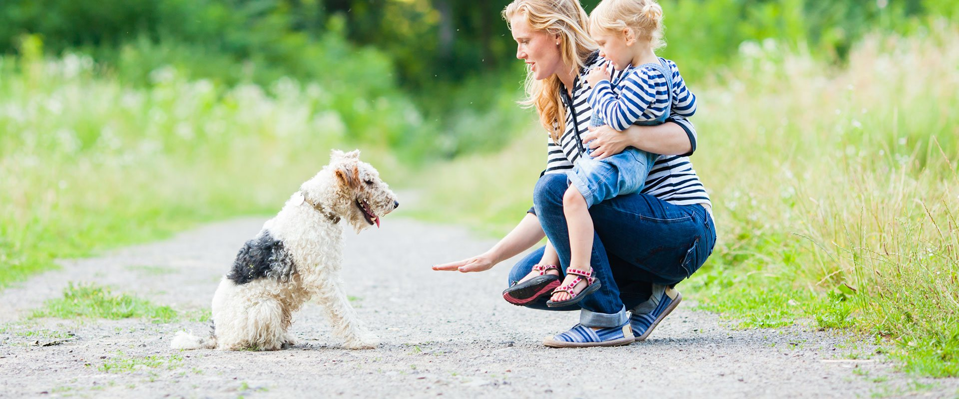 Dog Training | Dog Behaviourist | Eastern Companion Dog Training