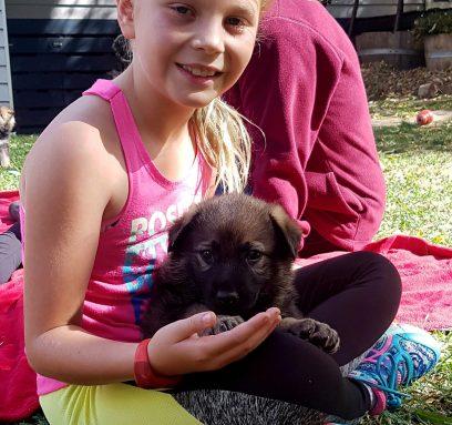 Early puppy development 0-16 weeks